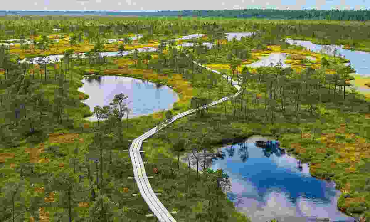 The boardwalks of Kemeri National Park lead you deep into its boglands (Shutterstock)