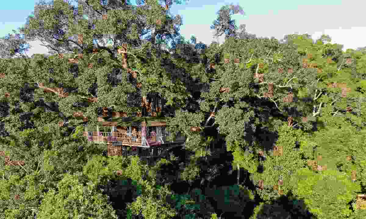 Sleep in the treetops at the Gibbon Experience, Laos (Shutterstock)