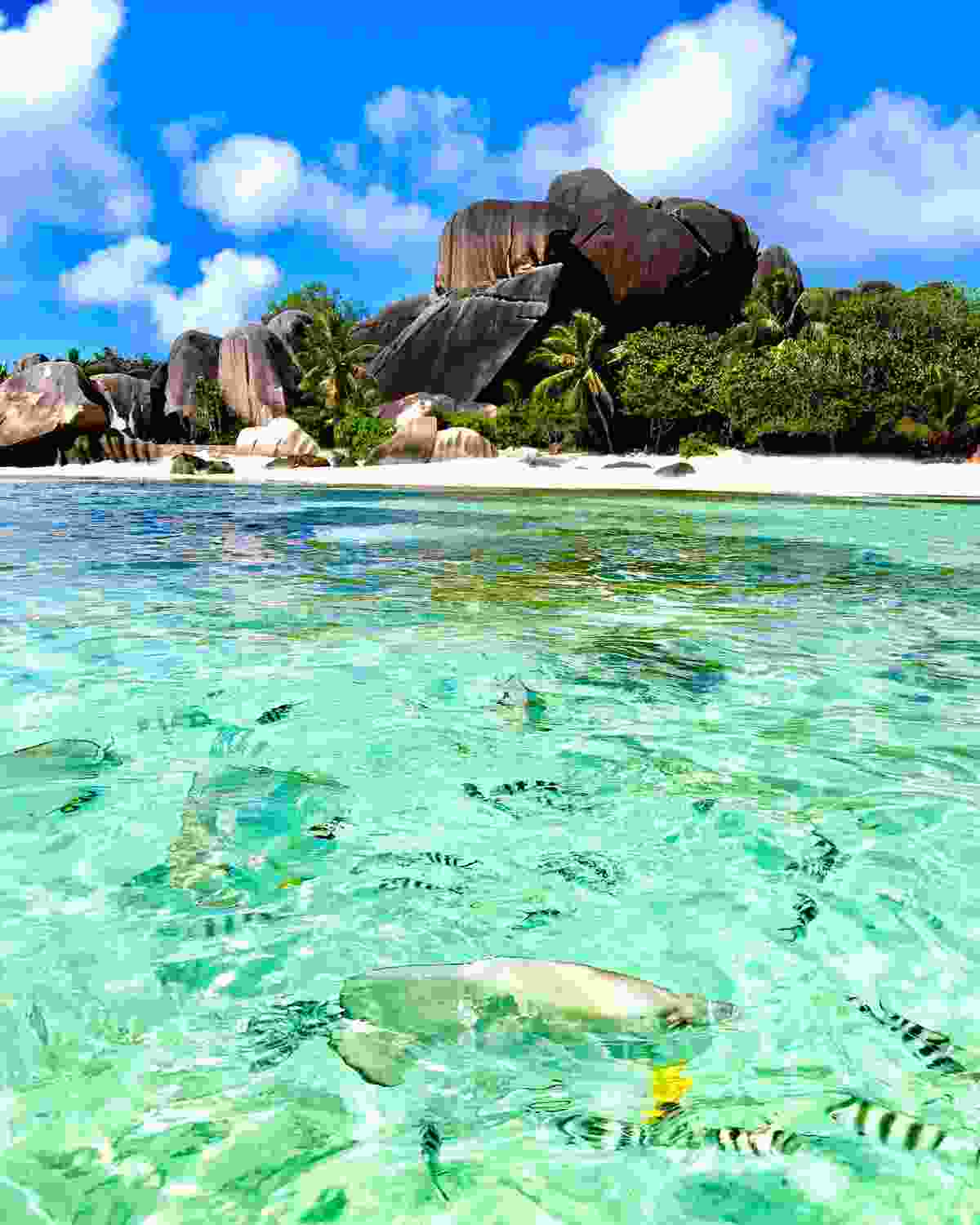 Need to know: The Seychelles (Shutterstock)