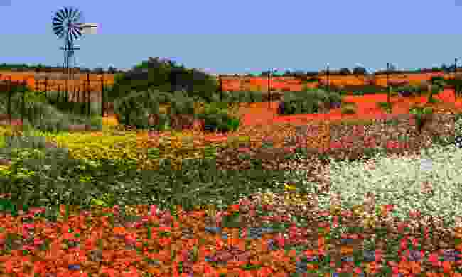 Namaqualand, South Africa (Shutterstock)