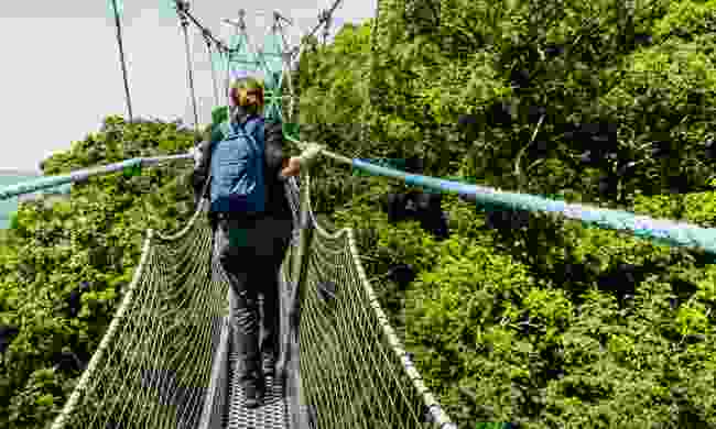The canopy walk in Nyungwe National Park has fine views (Shutterstock)