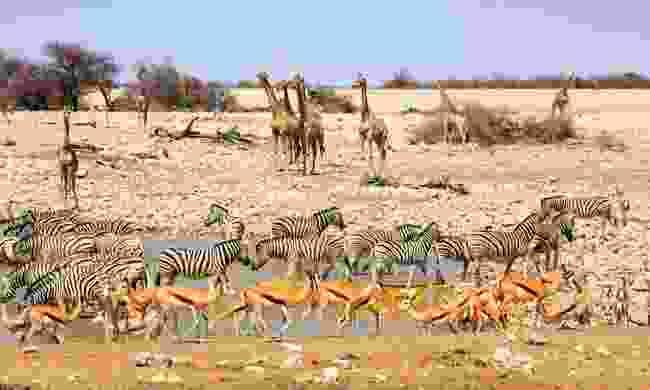 Spot wildlife in Namibia (Shutterstock)