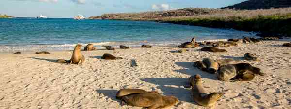 How to cruise the galapagos