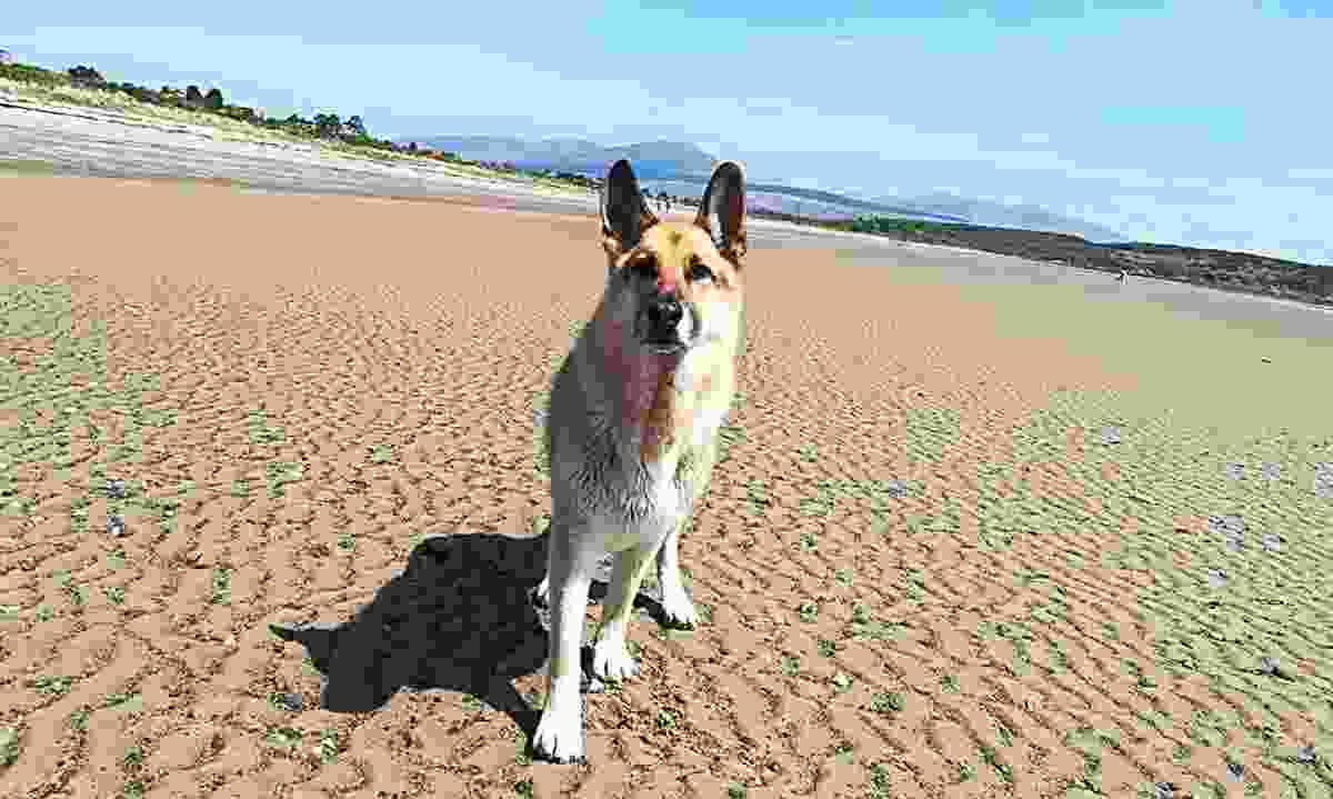 A dog enjoying Carradale Bay, Scotland (Mary Stewart)