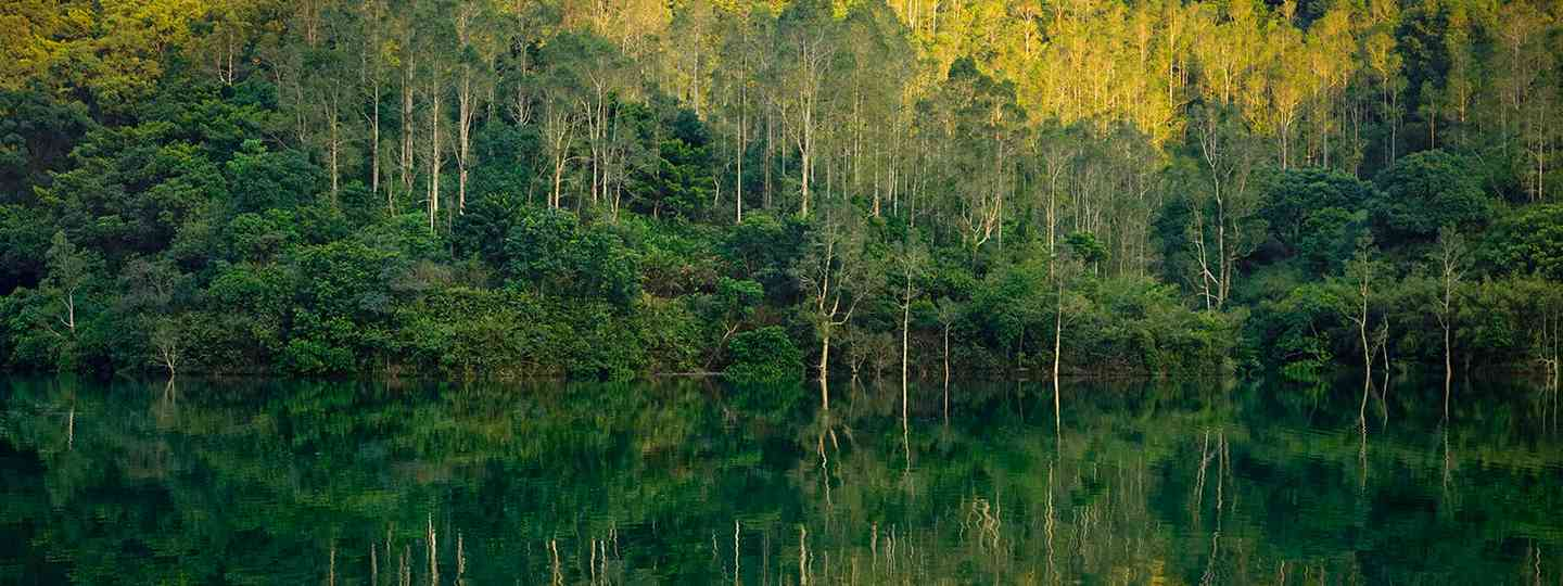 Tree reflections at sunset in Shing Mun Reservoir (Romain Jacquet Lagreze)