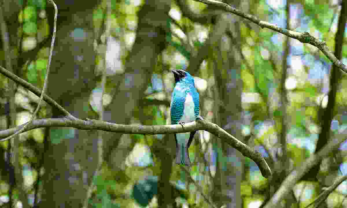 Bright birds hide in the forest (Sarah Gilbert)