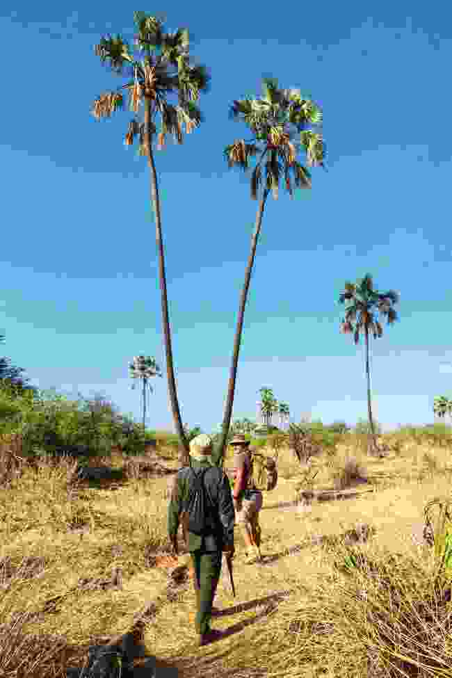Guide Andrew Molinaro and an armed ranger lead a walking safari through the palm trees (Graeme Green)