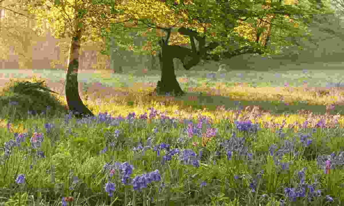 Ashenbank Wood. (Georgina Smith)