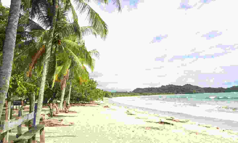 Palm trees shade the beach at Playa Garza in Nosara (Dreamstime)