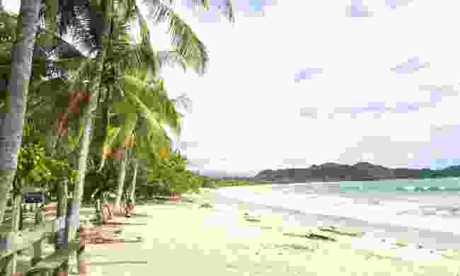 Palm trees shade the beach at Playa Garza in Nosara (Dreamstime)