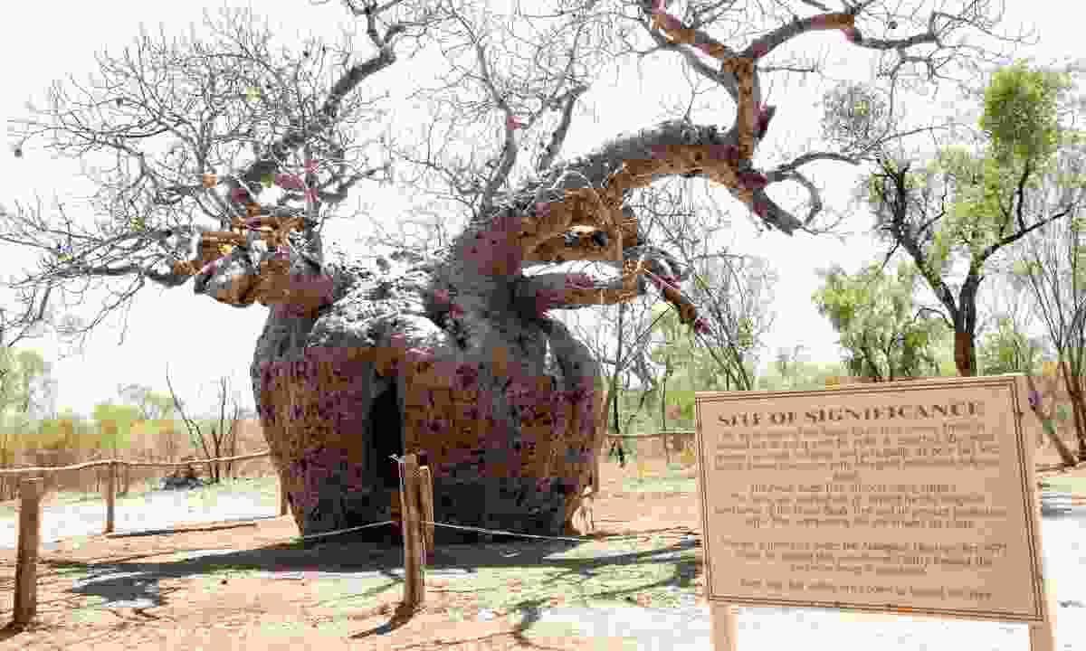 Boab Prison Tree (Dreamstime)