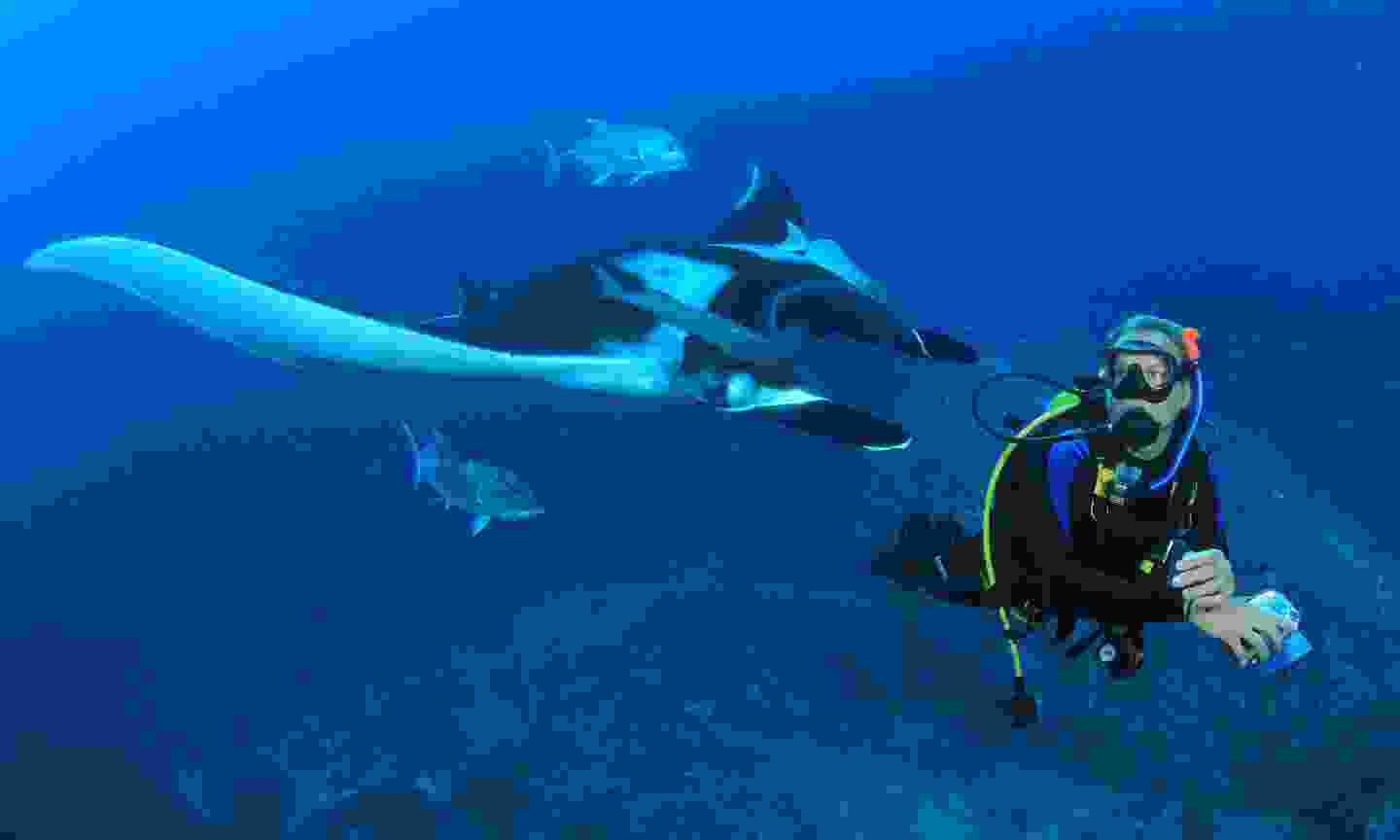 Diving with manta rays in The Maldives (Shutterstock)