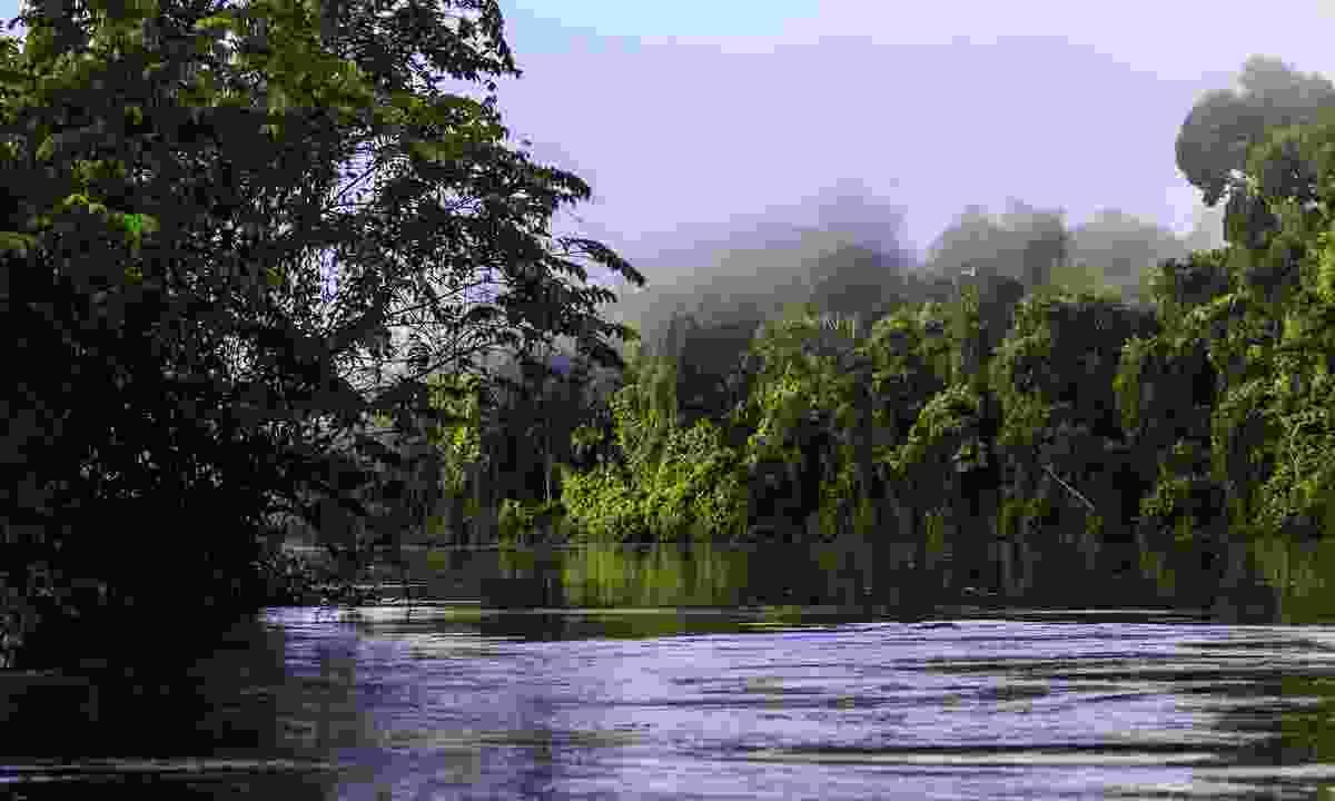 The Suriname Amazon at dawn (Shutterstock)
