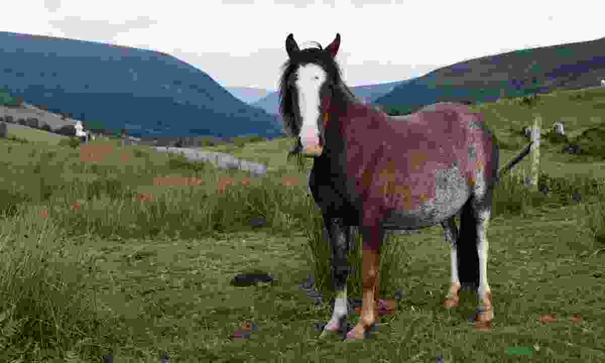 Wild pony in the Brecon Beacons National Park (Shutterstock)