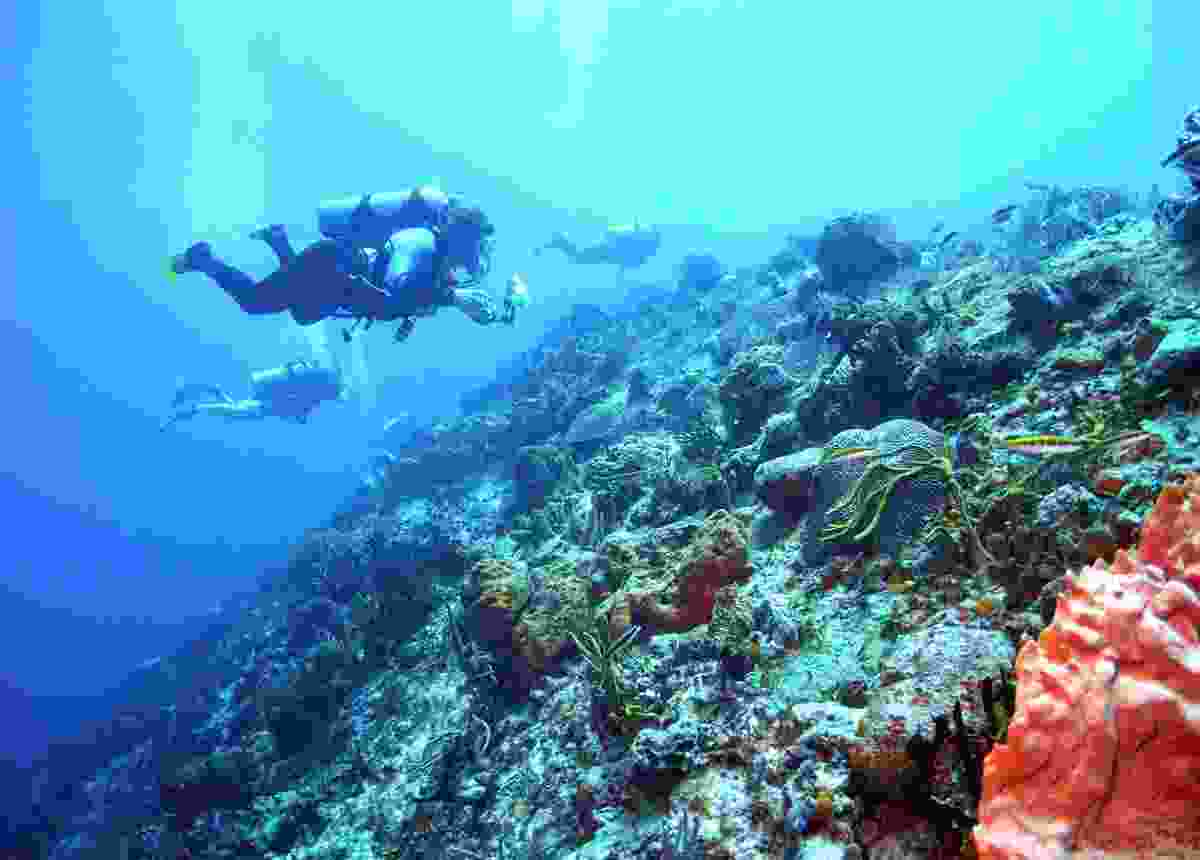 Divers drifting over Cozumel's reefs (Dreamstime)