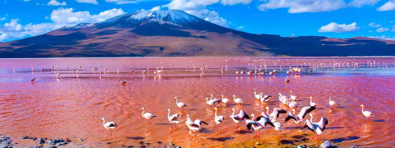 Laguna Colorada (Dreamstime)