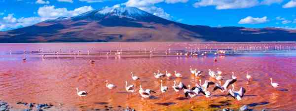 Laguna Colorada (Dreamstime)