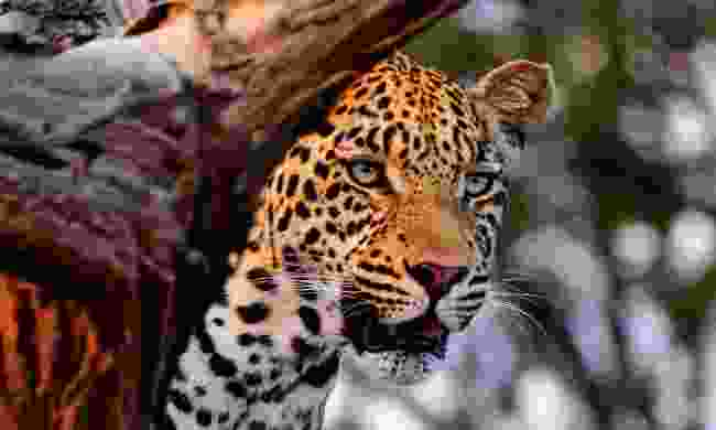 Spot wildlife on an African safari