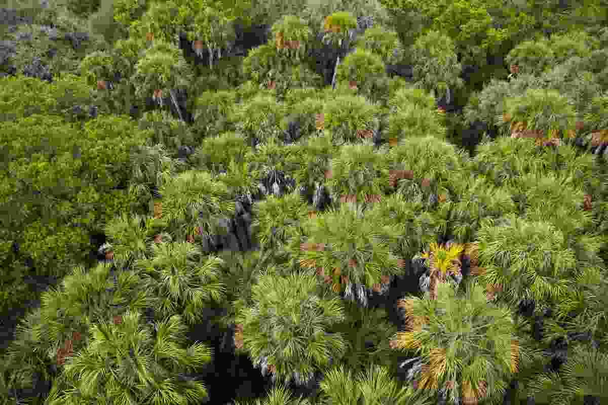 Above the trees in Myakka River State Park (Shutterstock)