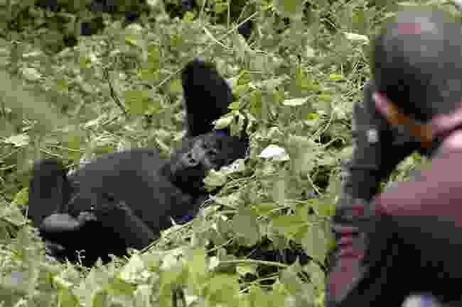 Sanctuary Gorilla Forest Camp in Uganda (Abercrombie & Kent)