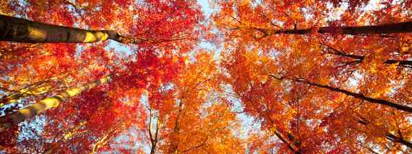 Autumn trees (Shutterstock)