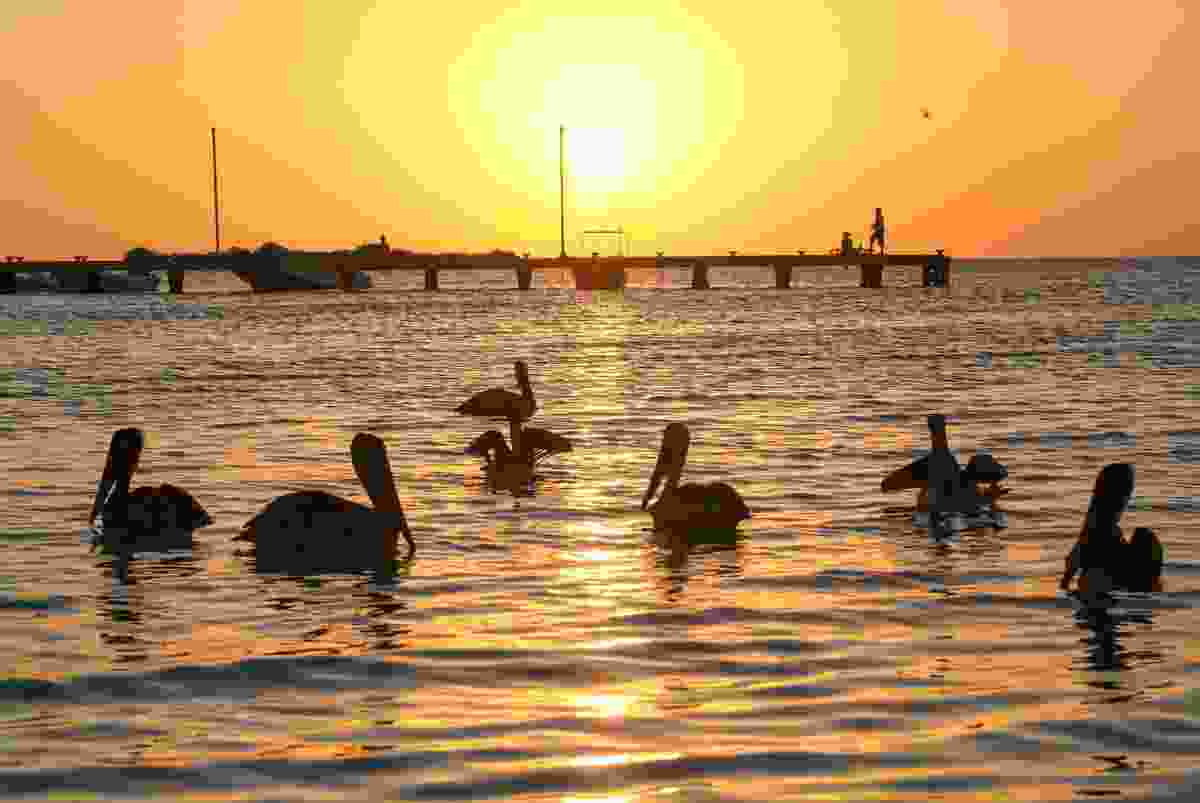 Pelicans at sunset, Holbox (Dreamstime)