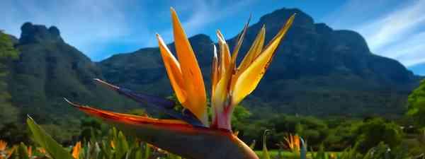 Kirstenbosch National Botanical Garden near Cape Town (Dreamstime)