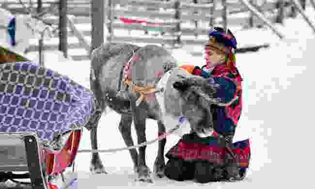 Man in traditional Sami costume with the reindeer in winter farm, Lapland, Finland (Dreamstime)