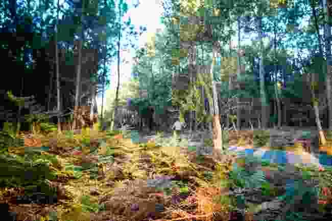 Landes Forest, Hossegor (Shutterstock)