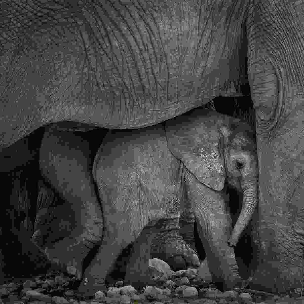 (Marina Cano/Remembering Elephants)