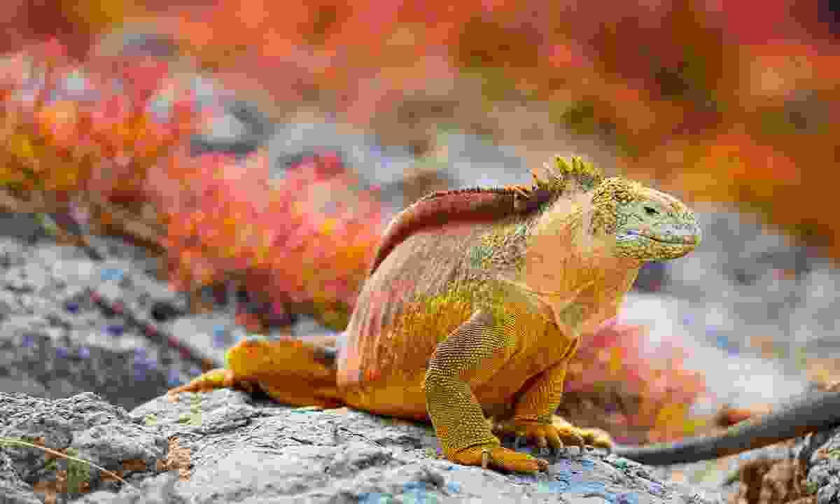 Get up-close with iguanas (Shutterstock)