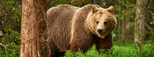 Guide to wildlife in Rhodope mountains, Greece (Shutterstock)