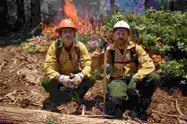 With forest firefighter Travis Thane, El Dorado National Park, California (BBC/Ruairi Dunne)