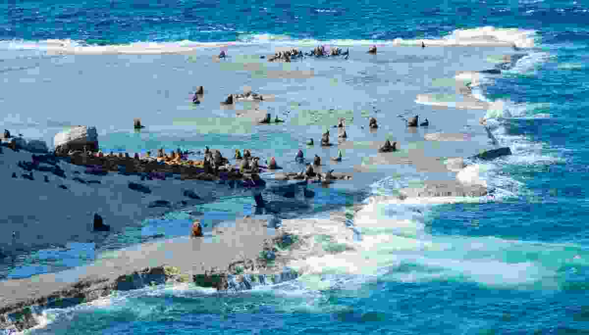 Fur Seals on the Valdes Peninsula, Argentina (Shutterstock)