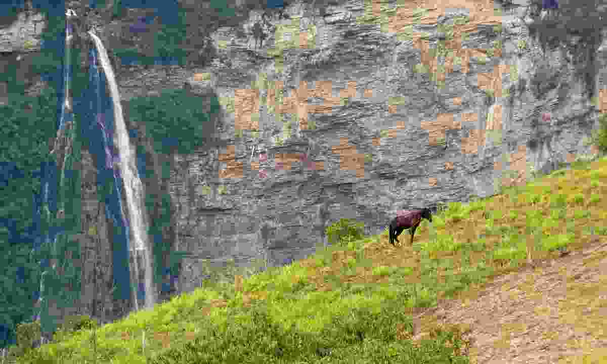 Horse grazing near Gocta Waterfall (Dreamstime)