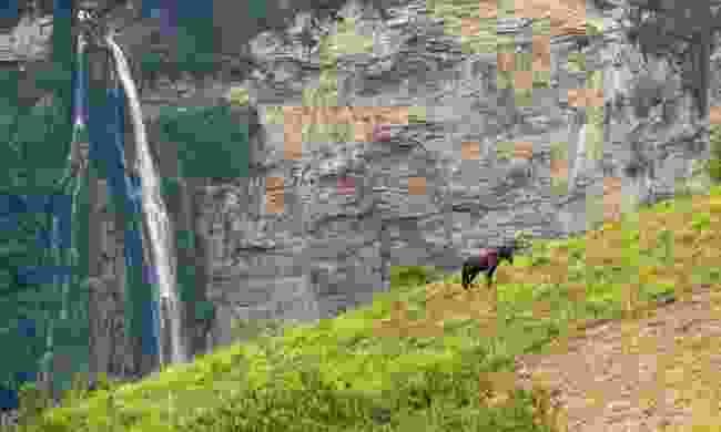 Horse grazing near Gocta Waterfall (Dreamstime)