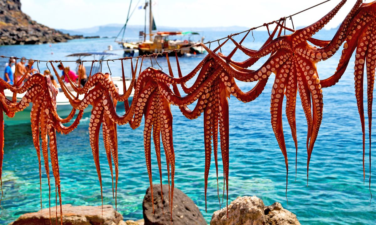 Octopus drying in the sun on Santorini (Shutterstock)