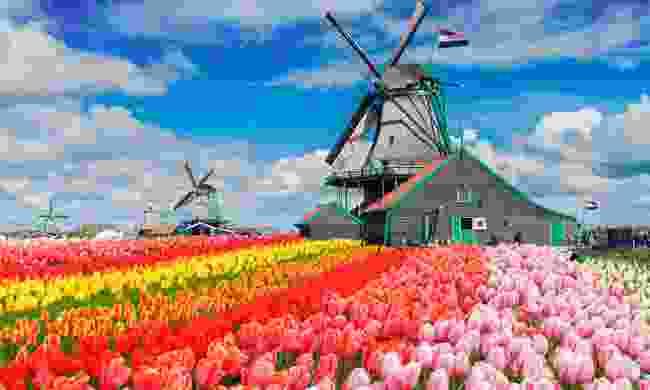 Keukenhof tulip fields (Shutterstock)