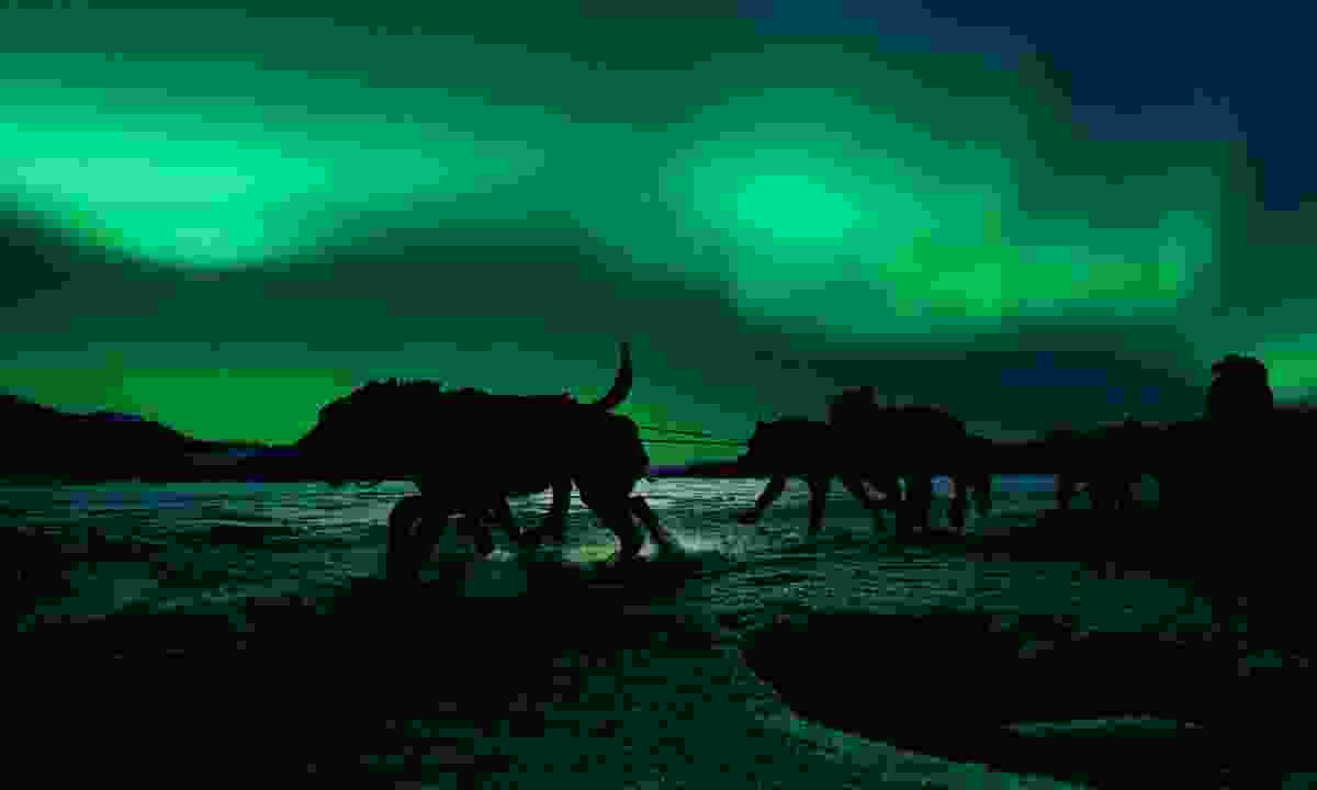 Dog sledding under the northern lights (Dreamstime)
