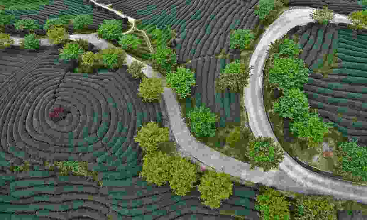 A fascinating photo of a road running through a farm, taken with a drone (Dreamstime)