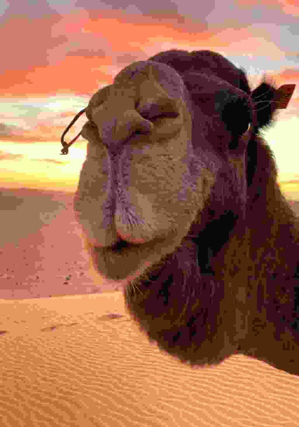 The Saharan sunset (Alice Morrison)