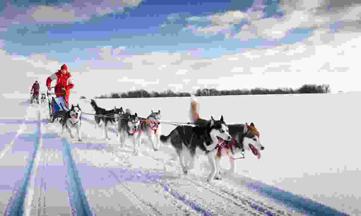 Husky sledding (Rail Discoveries)