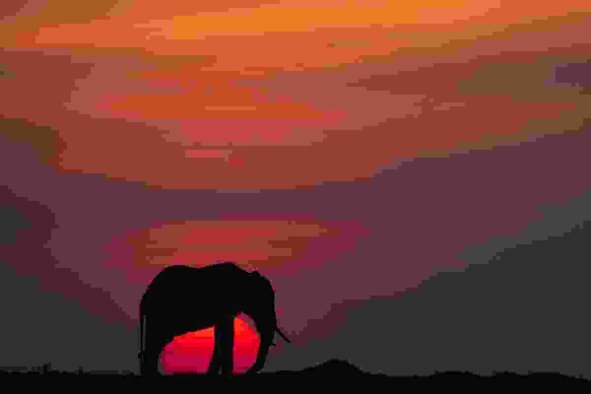 (Paul Goldstein/Remembering Elephants)