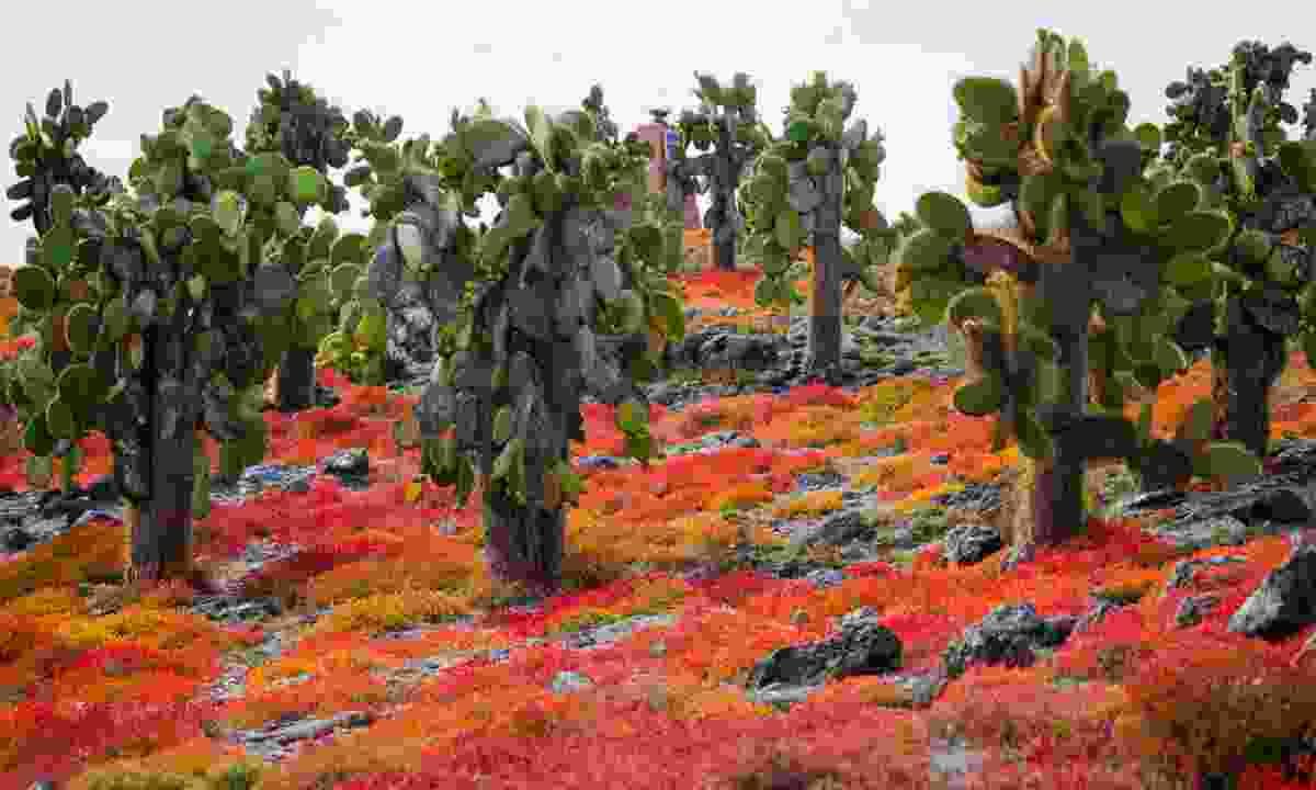 Cacti-studded landscape (Shutterstock)