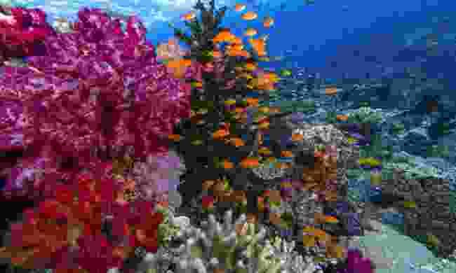 Explore Fiji's vibrant coral reefs (Shutterstock)