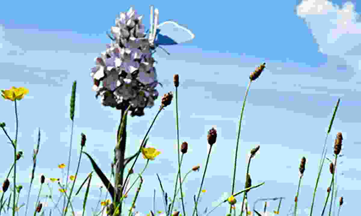 Orchid sculpture along the Great Aycliffe Way (Creative Commons: Thomas Nugent)