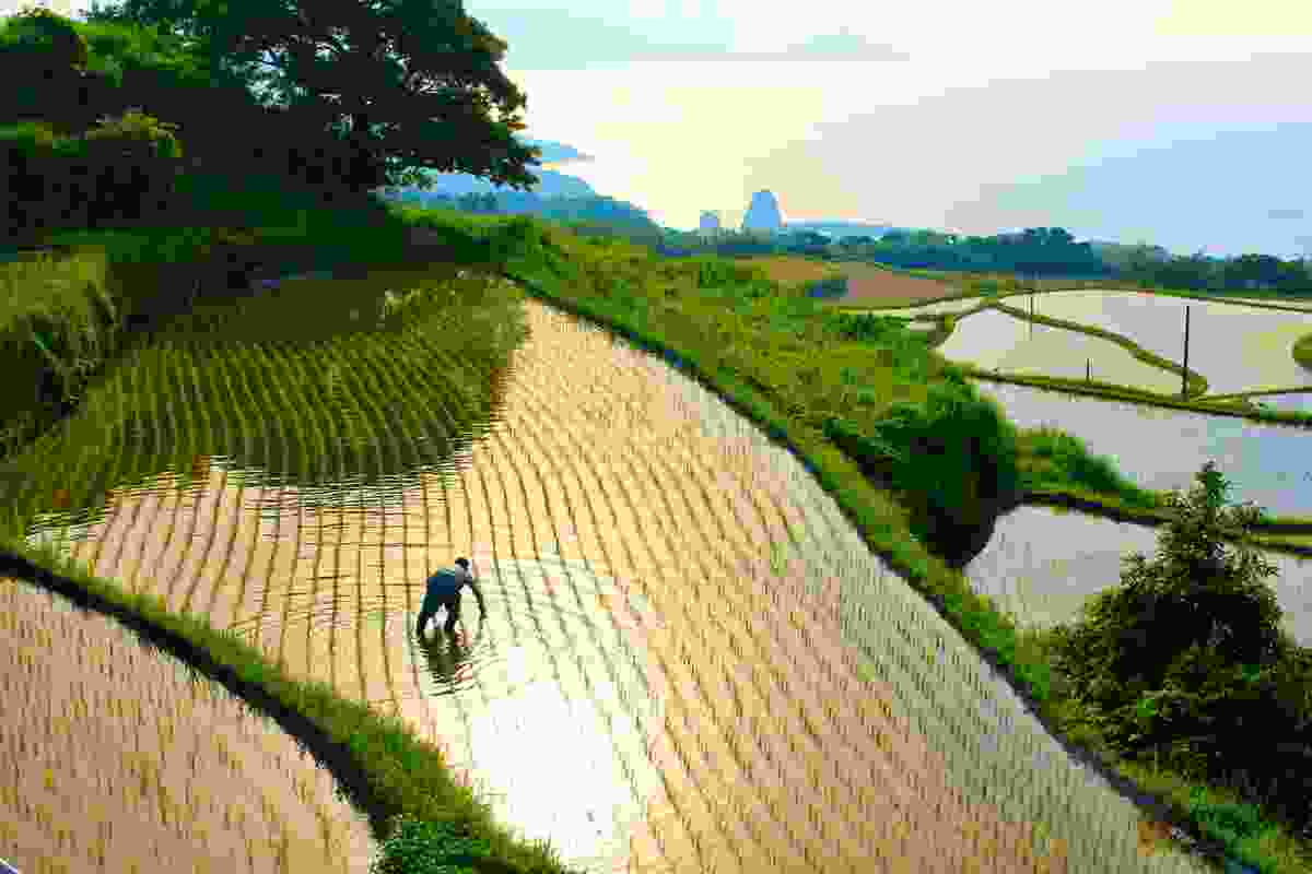 Farmer working on the Higashi-Ushirobata Rice Terrace (setouchitourism.or.jp)