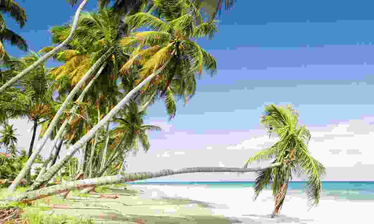 Sauteurs Beach (Dreamstime)