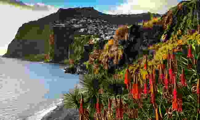 Looking towards the town of Camara de Lobos in Madeira (Dreamstime)