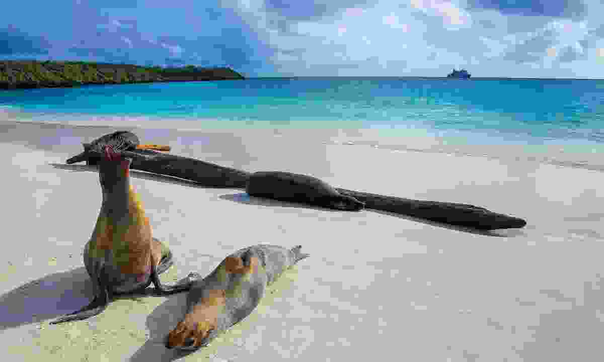 Sea lions relaxing on the beach on the Galápagos (Dreamstime)